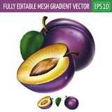Plum on white background. Vector illustration Royalty Free Stock Photo