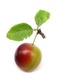 Plum wild ringlov Stock Photo
