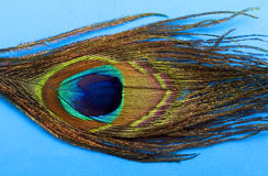 Pluma 1 del arco iris Imagenes de archivo