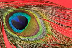Pluma 2 del pavo real imagen de archivo libre de regalías