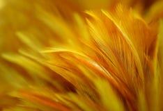 Pluma abstracta del pollo Imágenes de archivo libres de regalías