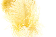 Pluma amarilla Foto de archivo