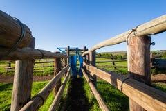 Pluma animal del corral del ganado de la granja Fotografía de archivo