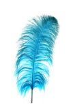 Pluma azul de la avestruz Imagen de archivo