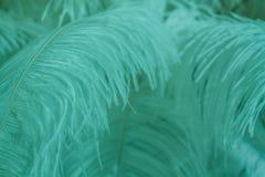 Pluma azul de la menta del pájaro para el fondo Fotos de archivo