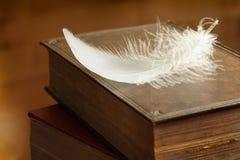 Pluma blanca Foto de archivo libre de regalías