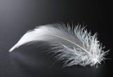 Pluma blanca Fotos de archivo