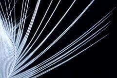 Pluma blanca 4 Foto de archivo libre de regalías
