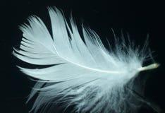 Pluma blanca Fotos de archivo libres de regalías