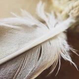 Pluma blanca Imágenes de archivo libres de regalías
