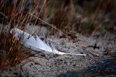 Pluma blanca Fotografía de archivo