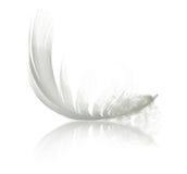Pluma blanca Fotografía de archivo libre de regalías