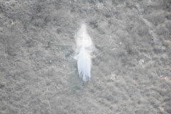 Pluma blanca Imagen de archivo