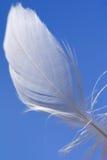 Pluma blanca con el cielo azul como fondo Fotos de archivo