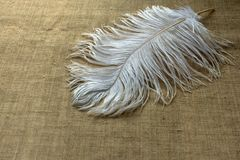 Pluma blanca de la avestruz en los manteles de lino imagen de archivo libre de regalías