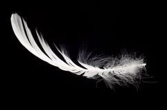 Pluma blanca del cisne aislada Foto de archivo libre de regalías