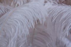 Pluma blanca del pájaro para el fondo Fotografía de archivo libre de regalías