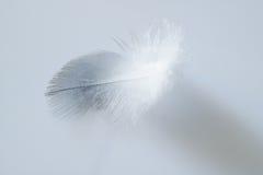 Pluma blanca del pollo Fotografía de archivo
