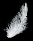 Pluma blanca en fondo negro Imagen de archivo