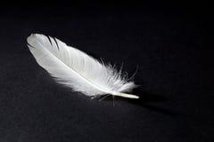 Pluma blanca en fondo negro Foto de archivo libre de regalías