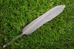 Pluma blanca en la hierba Imagen de archivo