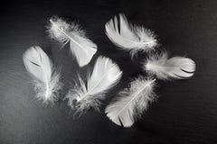 Pluma blanca en piedra negra Fotos de archivo