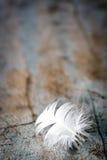 Pluma blanca en viejo fondo de la madera Imagenes de archivo
