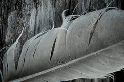 Pluma blanco y negro Fotos de archivo libres de regalías