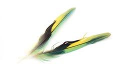 Pluma colorida Imagen de archivo