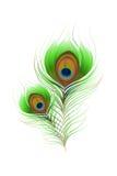 Pluma colorida del pavo real Fotos de archivo