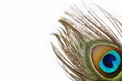 Pluma colorida del pavo real Imagen de archivo