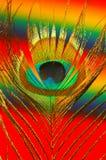 Pluma colorida del pavo real Imagenes de archivo