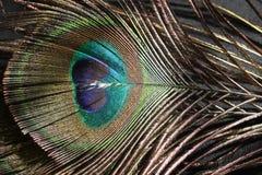 Pluma colorida del pavo real Fotografía de archivo libre de regalías