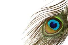 Pluma colorida del pavo real, cierre para arriba Imagen de archivo