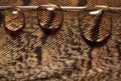 Pluma con descensos Foto de archivo libre de regalías