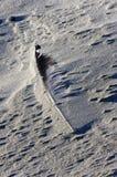 Pluma cubierta con la arena, isla de Ameland Foto de archivo