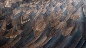Pluma de Eagle que sopla en el viento Ciérrese encima de tiro macro del pelo animal en la cámara lenta ilustración del vector