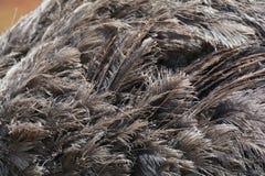Pluma de la avestruz Imagenes de archivo