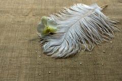 Pluma de la avestruz y flor blancas de la orquídea imagen de archivo