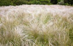 Pluma de la hierba del campo Fotografía de archivo libre de regalías
