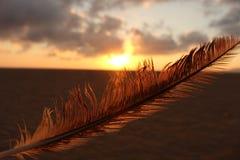 Pluma de la puesta del sol Foto de archivo