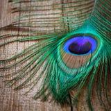 Pluma de los pavos reales en tarjeta de madera Fotografía de archivo