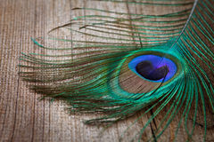 Pluma de los pavos reales en tarjeta de madera Imagenes de archivo