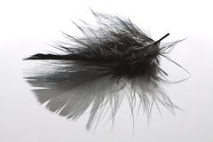 Pluma de pájaro Foto de archivo