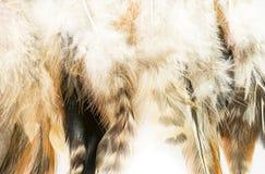 Pluma de pájaro fotos de archivo
