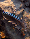 Pluma de pájaro Fotografía de archivo