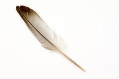 Pluma de pájaro aislada imágenes de archivo libres de regalías