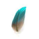 Pluma de pájaro aislada Imagen de archivo