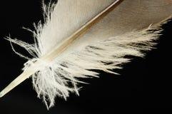 Pluma de pájaro del primer Imágenes de archivo libres de regalías