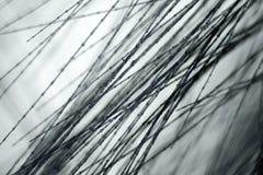 Pluma de pájaro en el microscopio Imagen de archivo libre de regalías
